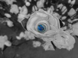 The Blue Sapphire Picture