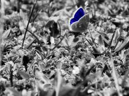 bluelittlebatterfly
