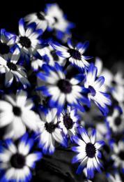 Selectiveflower