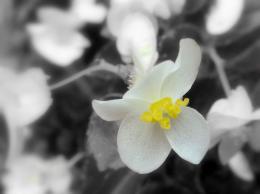 The White Yellow Flower