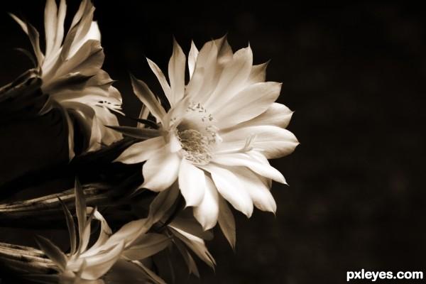 My cactus flower