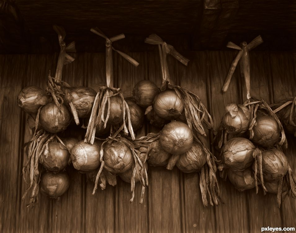 Onions in Sepia