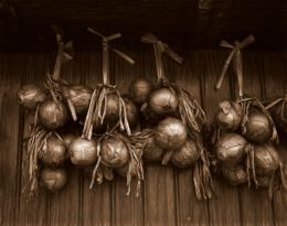 Onions in Sepia Picture