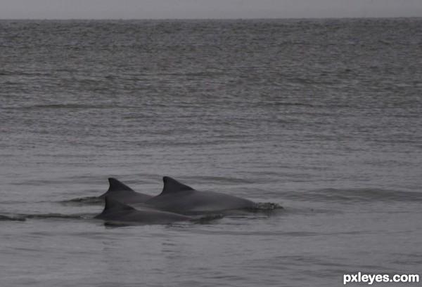Gray sky, gray sea, gray dolphins (See SBS)
