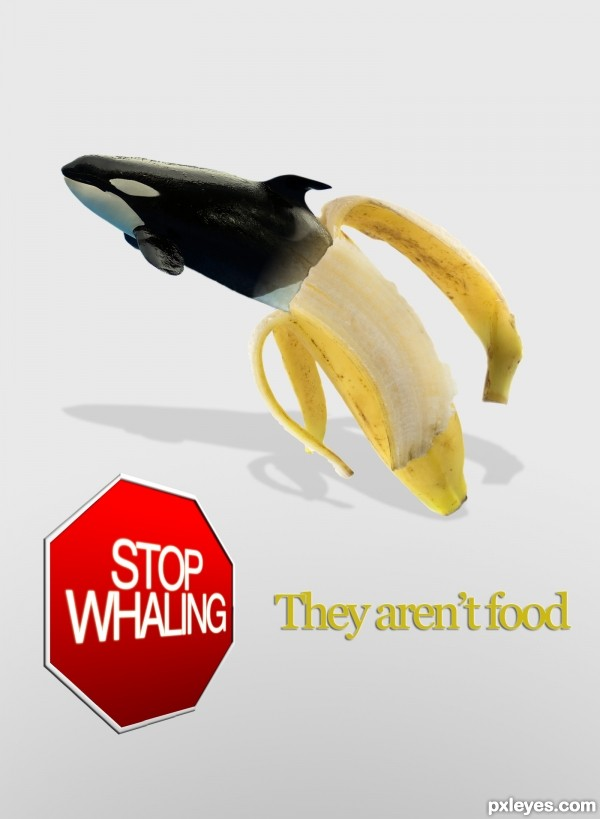 No Whaling!!!