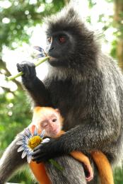 monkey eat flower