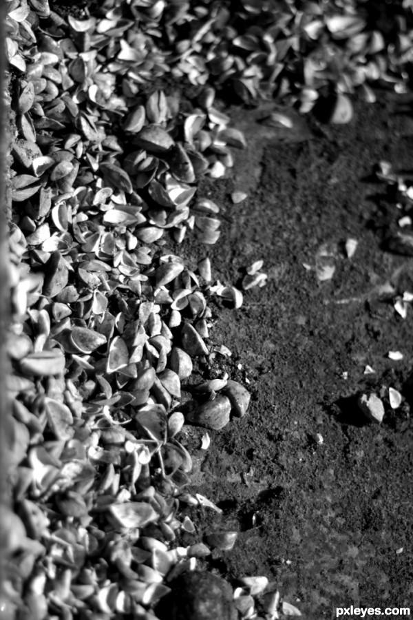 Mini mussels