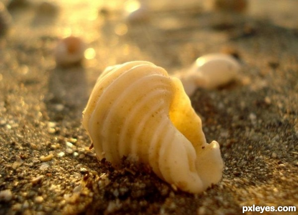 Today is a smooth white seashell, hold it close and listen to the beauty of the hours - Unknown
