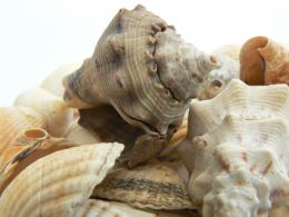 Shells Picture