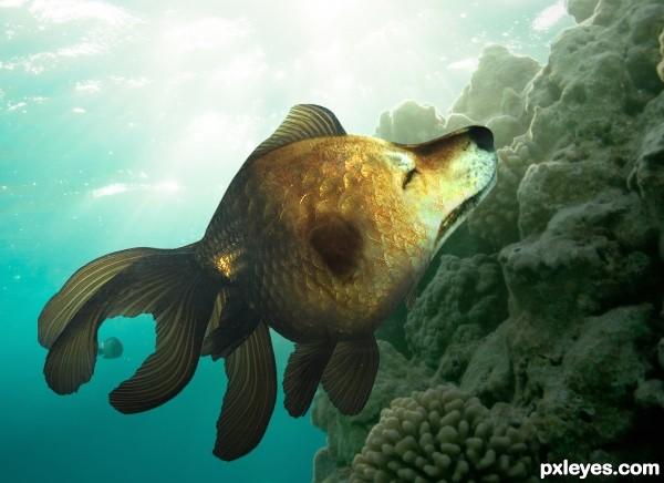 Brazilian Dogfish