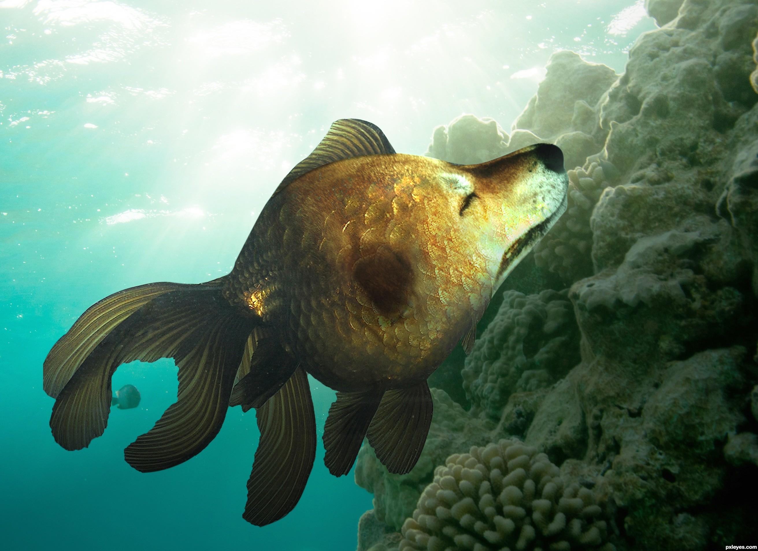 Betta Fish Diseases Sick Betta Fish  Bettafishorg