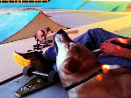 dogtownlords