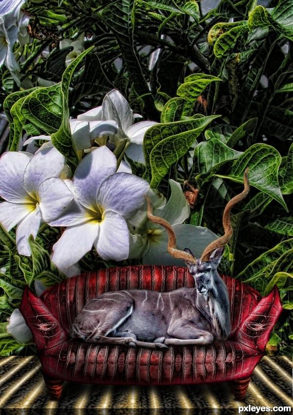 Kouch Potato Kudu