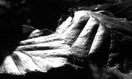 LeafShine
