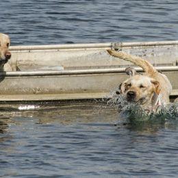 Twodogsinajonboat