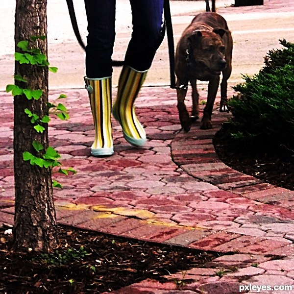 Dog Walking Shoes