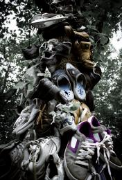 Shoe Tree Picture