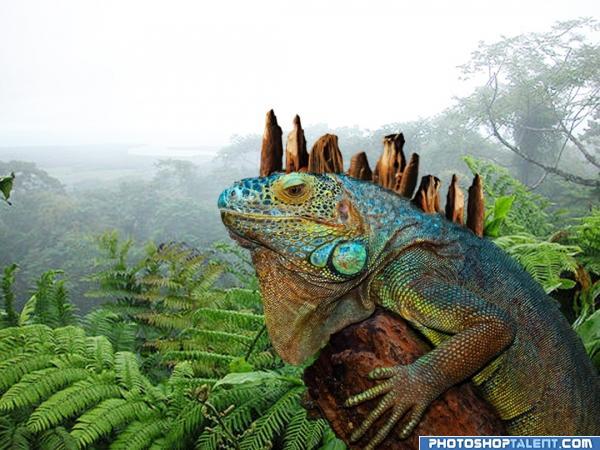 Iguana??