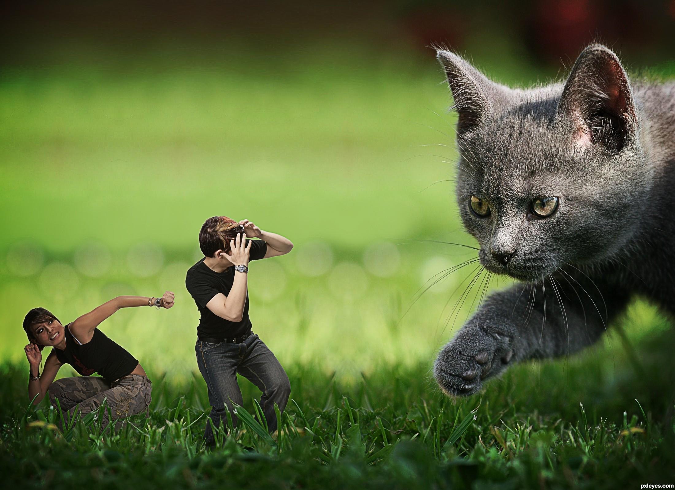 [Image: Cat-Attack-4fb645b908368_hires.jpg]