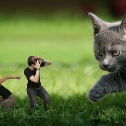 Cat Attack Picture