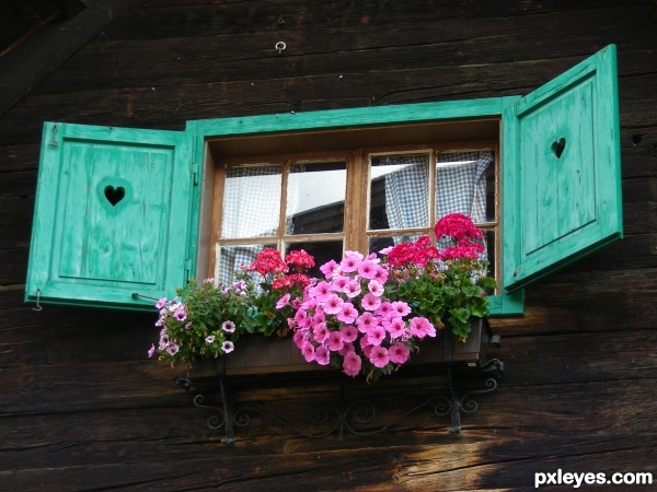 Shutters and flowers