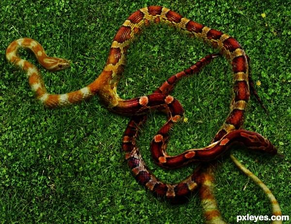 twins snake