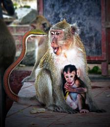 MonkeyBizniss