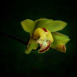 OrchidsSecret