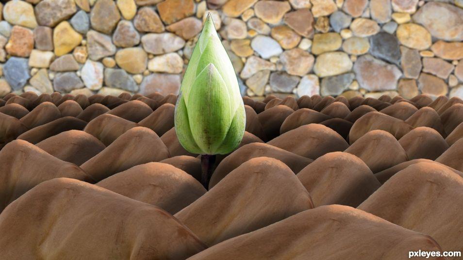 Lotus in Horsebacks