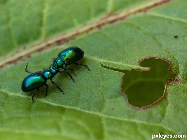 Possessive bugs