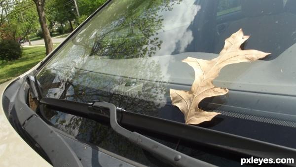 leaf on windshield