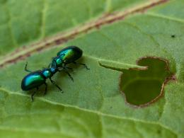 Possessivebugs