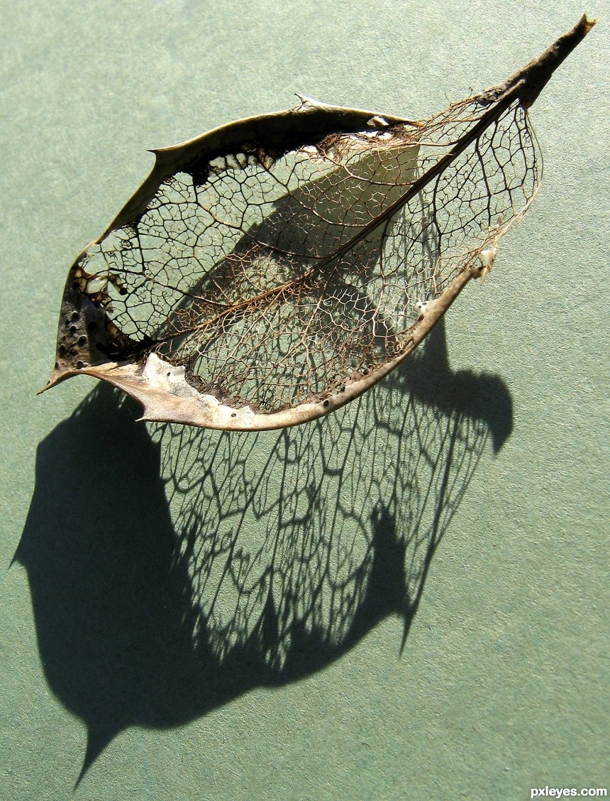 Skeleton Leaf photoshop picture)