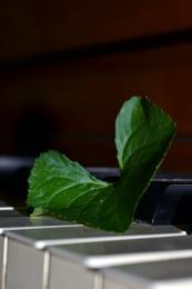 HeartofMusic