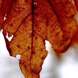 AutumnVeins