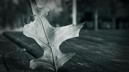 The Standing Leaf