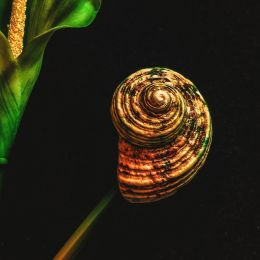 shellonaflowerstem