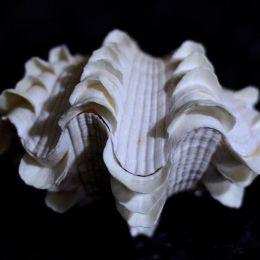 Stegoshell