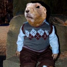 smart beaver Picture