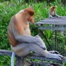 sitting monkey photoshop contest