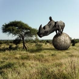 RhinocerosBignogginus