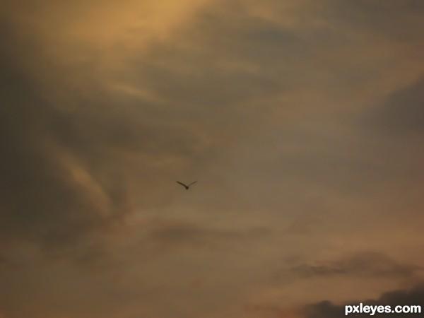 A Flight to Home