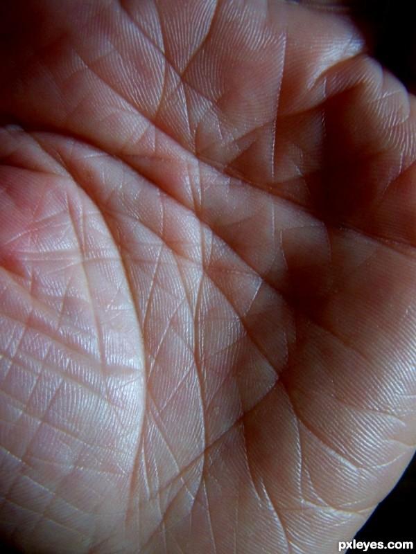 Palmists handbook