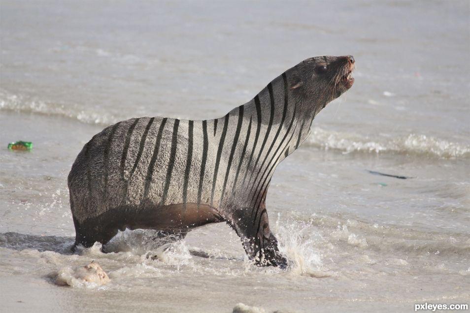 Zebra Seal