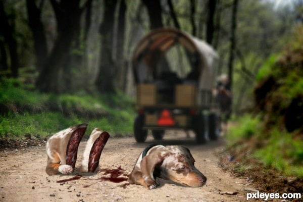 dead dog...