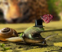 Snailride