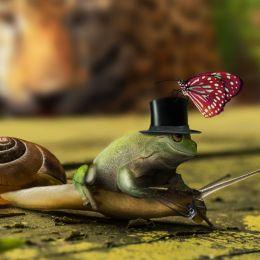 Snailride Picture