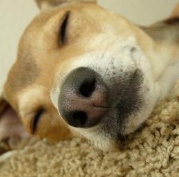 SleepAnytime