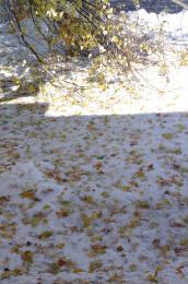 snowandfallleaves