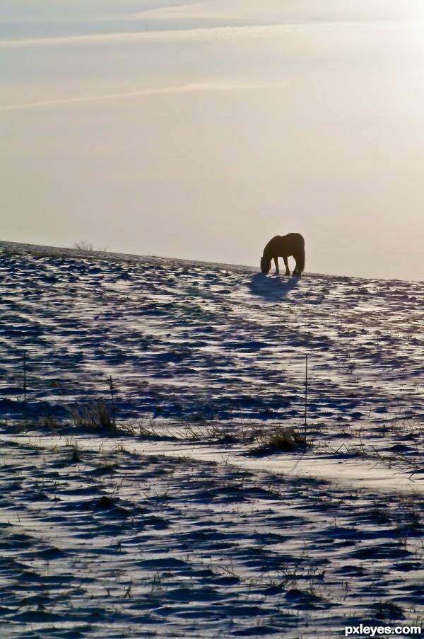 Snowy Desert
